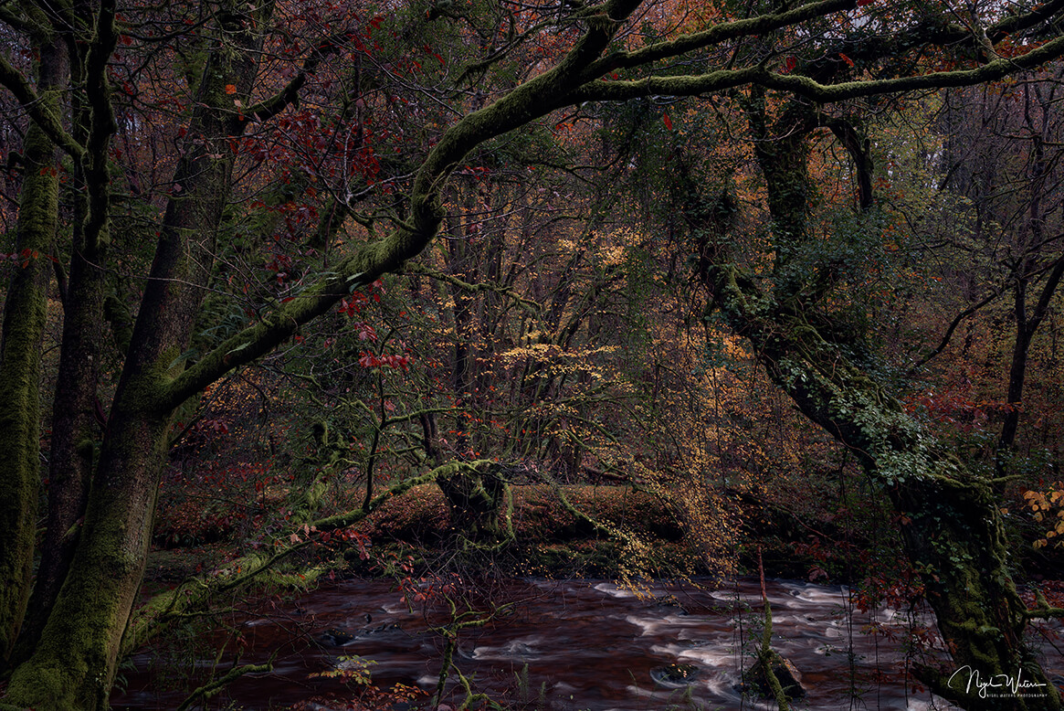 Encapturing Chaos - A chaotic Forest Woodland Photograph Brecon Beacons