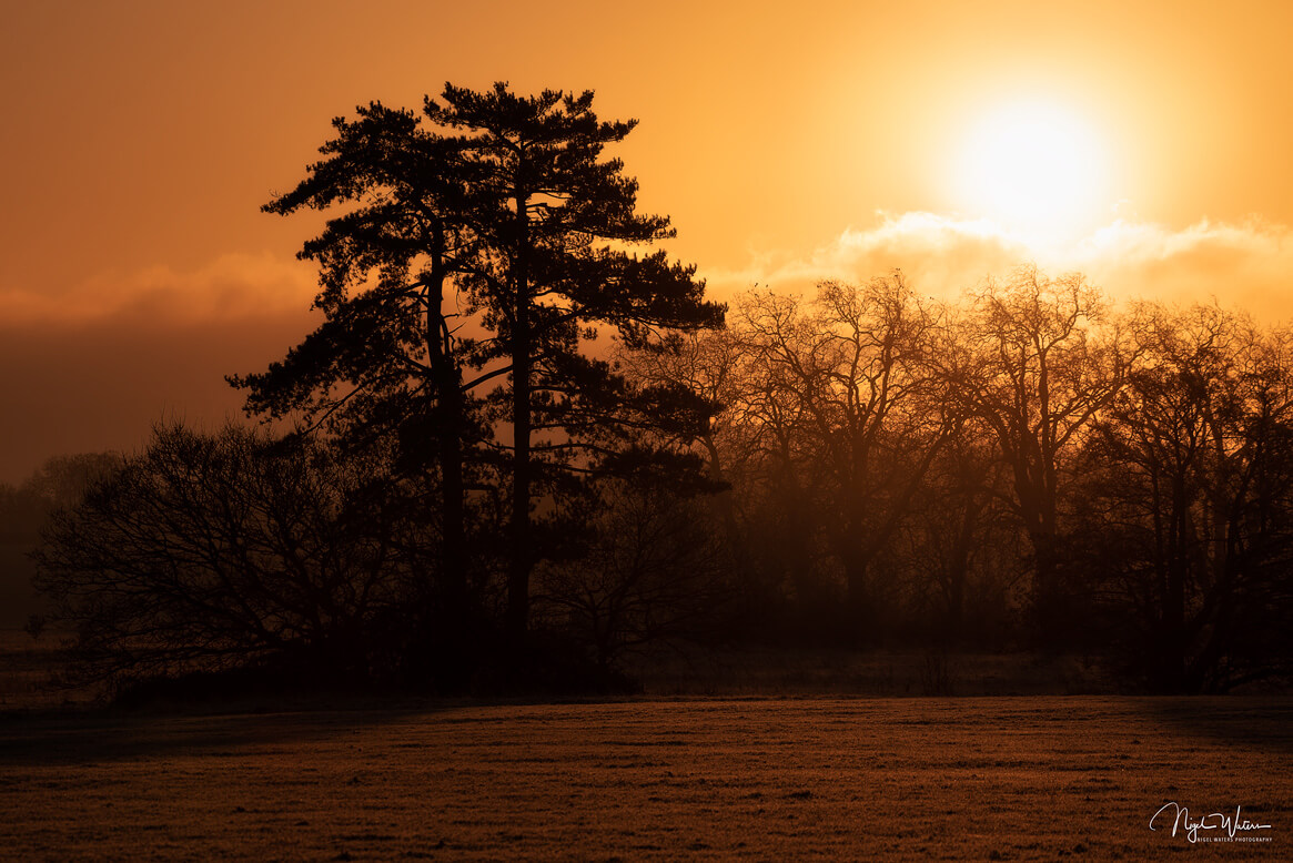 A New Day - Golden Sunrise Photograph in Worcestershire
