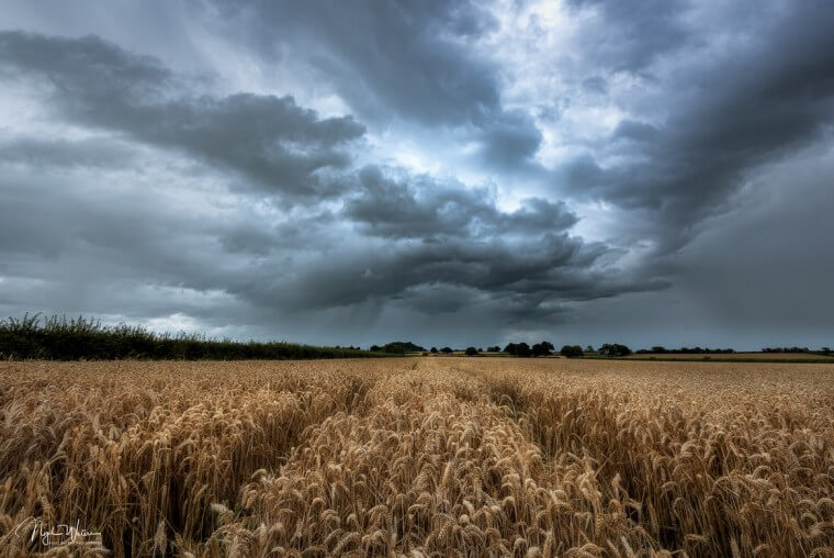Tempestuous Fields Of Gold Limited edition fine art print
